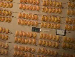 Naranjas usadas como batería para el iPhone