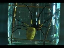 Piel humana reforzada con tela de araña soporta impactos de bala