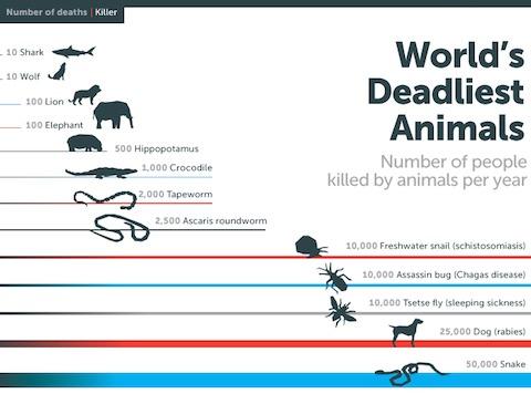 ¿Cuál es el animal que mata más personas al año? La respuesta te sorprenderá