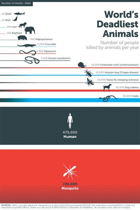 Lista de animales más peligrosos para las personas