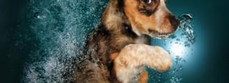 8 fotos de perros monísimos… ¡bajo el agua!