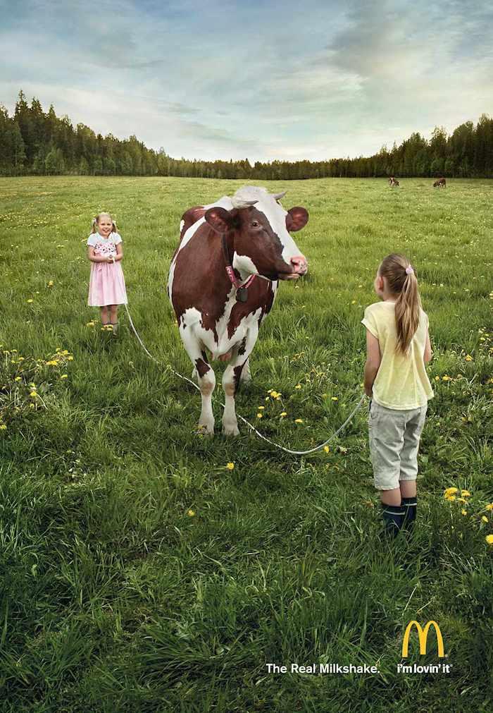 Vaca 2