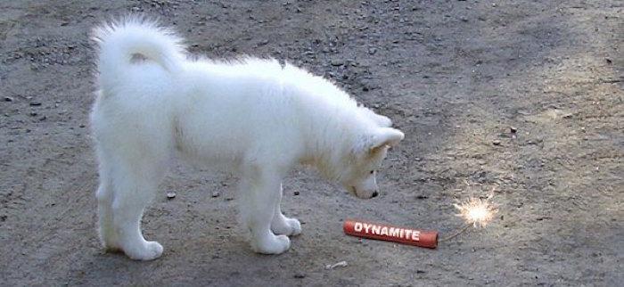 perro dinamita