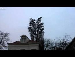 ¿Qué pasa cuando cientos de pájaros se posan en el mismo árbol?