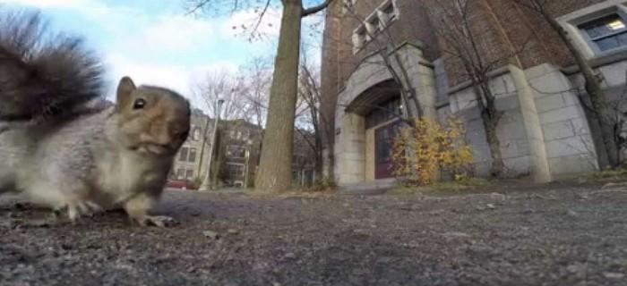Esto es lo que pasa si le das una GoPro a una ardilla
