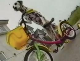 Este perro puede subirse a una bici y conducirla, ¡sin trucos!