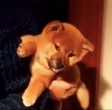 Perro muy cachondo que contesta sí o no a divertidas preguntas