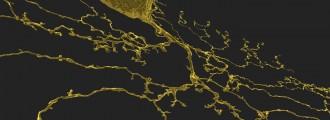 Lucha contra el Alzheimer jugando con Eyewire