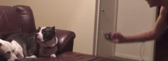 A este perro no le gusta que le hagan fotos