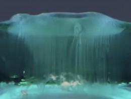Alucina descubriendo mundos microscópicos en estos espectaculares vídeos