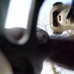 Mono cogiendo un drone