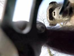 Recopilación de fails de drones; Mono cazando o motorista comiéndoselo de frente, ¿cuál te gusta más?
