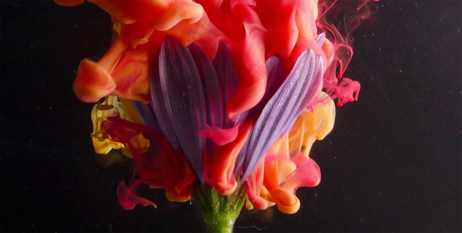 Flor con tinta vista en macro