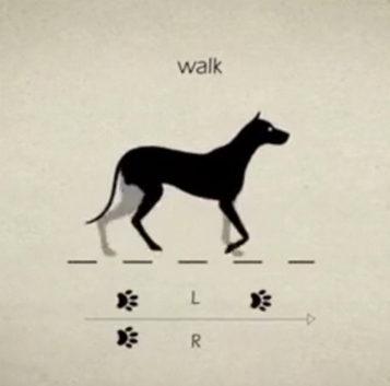Cómo camina un perro