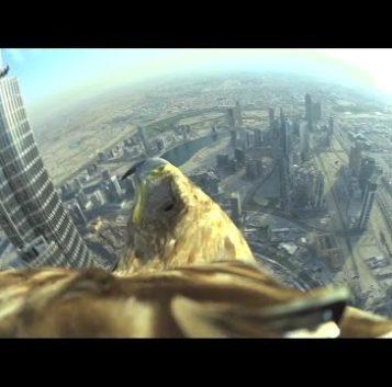 Alucina con esta cámara a lomos de un águila sobrevolando el Burj Khalifa en Dubai