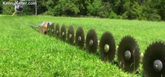 Así se podan árboles cerca de líneas de alta tensión: A lo bestia